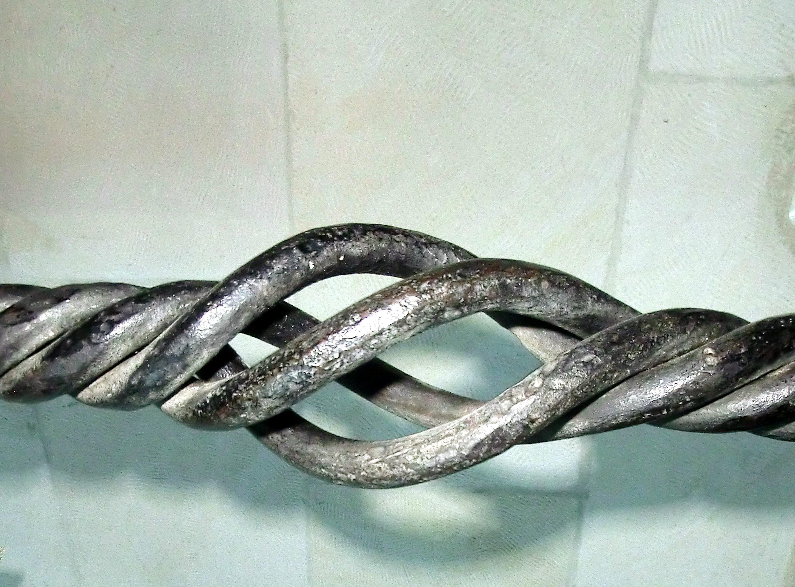 נרתיקה כלוא - מתפתלת בחלליה