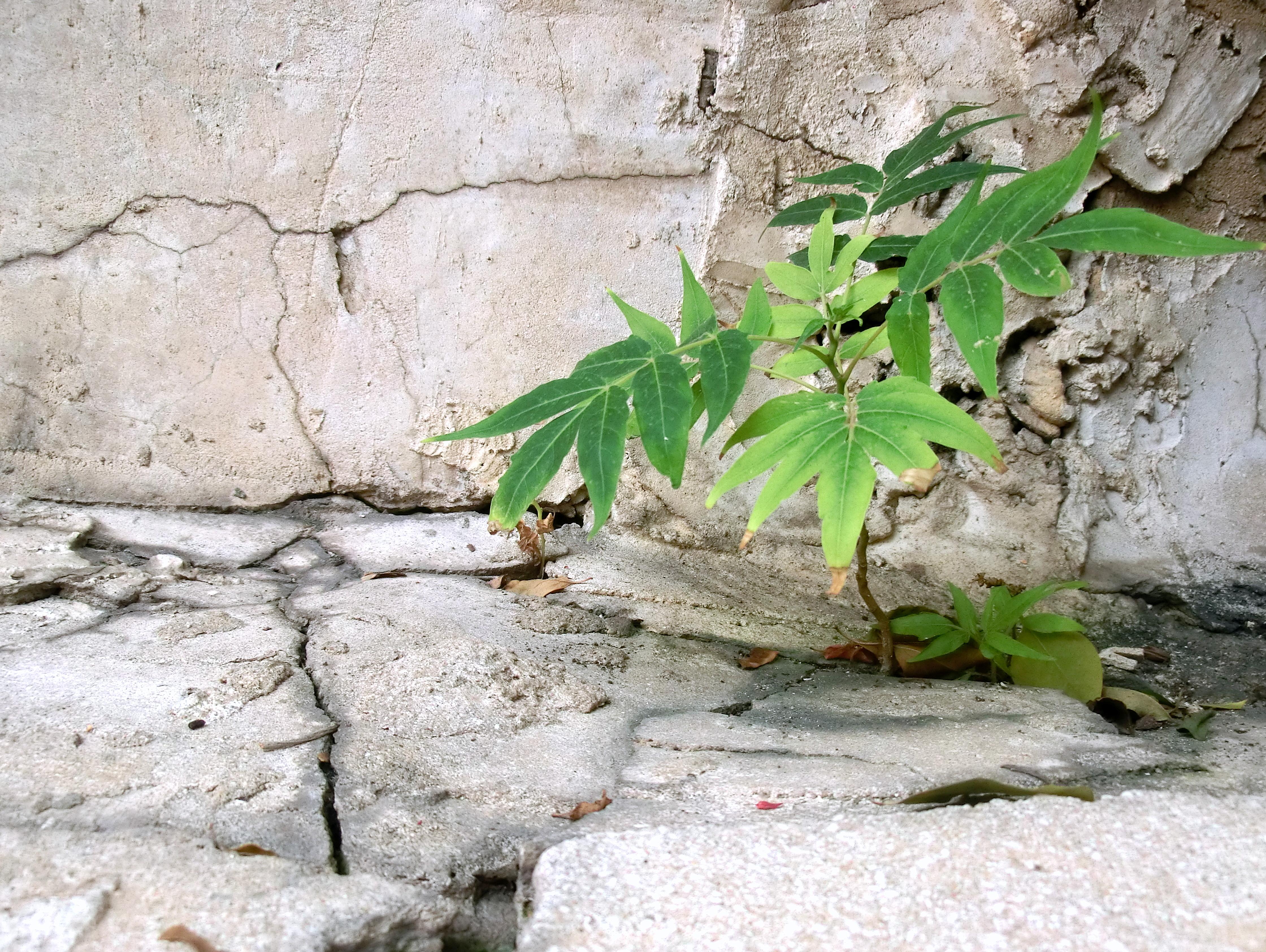 הנביטה מעלה - גם בבטון